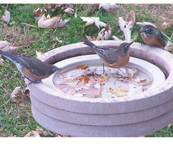 Bird Bath Raft SE6017'