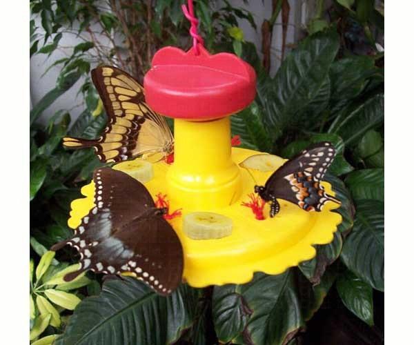 Butterfly Feeder SE78200'