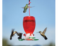 Big Red Hummingbird Feeder SE952