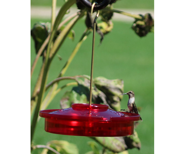 Hummingbird Haven SE996