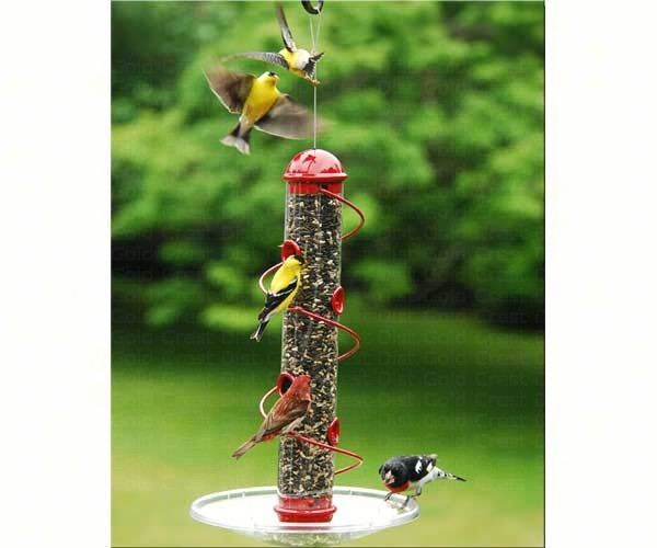 17in. Red Spiral Sunflower Feeder SEBQSBF3R'