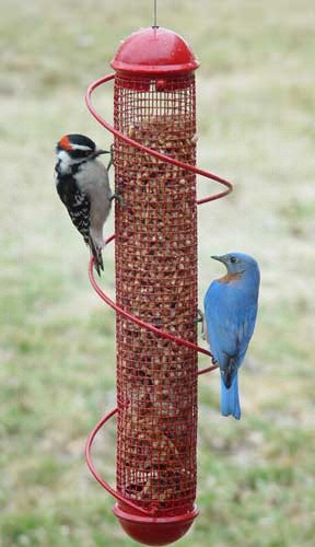 Red Peanut Feeder (SEBQSBF4R)