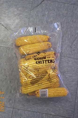Ear Corn Bag of 12  Plus Freight SEEC101'