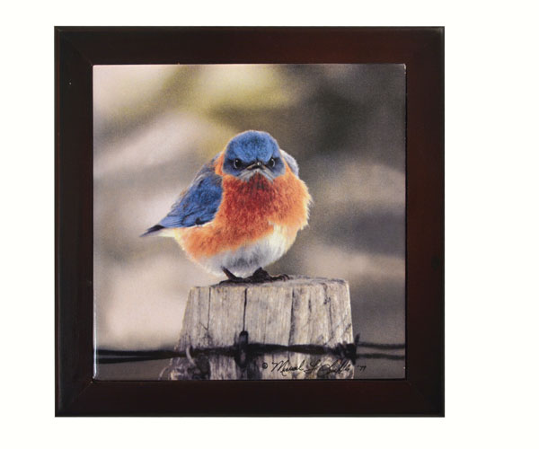 Mad Bluebird, Trivet SEEK5500'