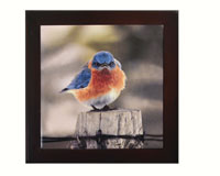 Mad Bluebird, Trivet-SEEK5500