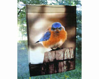 Flag Large, Mad Bluebird-SEEK6700