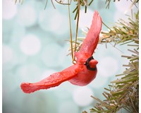 Flying Cardinal Ornament-SEFWC126