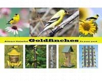 Attract Colorful Goldfinches To Your Yard-SEPOSTGOLDFINCH