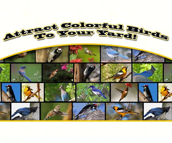 Attract Colorful Birds to your Yard SEPOSTWESTERN'