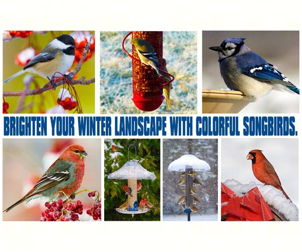 Brighten Your Winter Landscape With Colorful Song SEPOSTWINTER