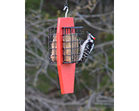 Dual Suet Feeder Red SERUBDSFR