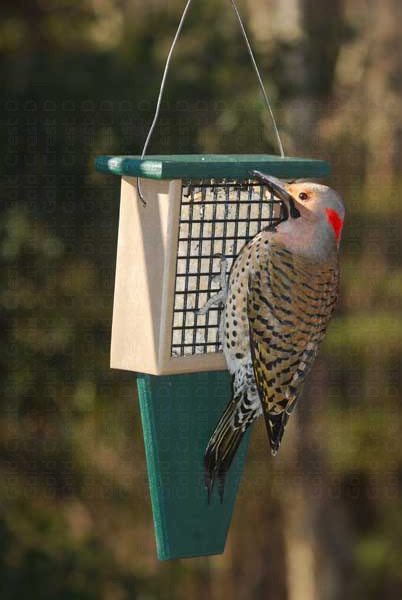 Suet Feeder with Tail Prop Hunter Driftwood SERUBSF100HD'