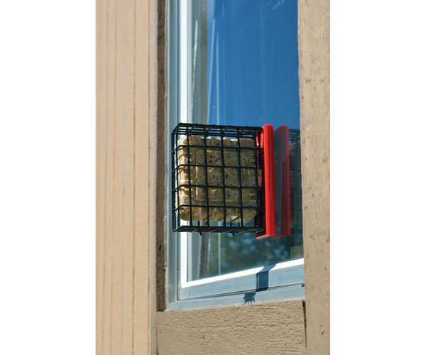 Red Suet Window Feeder SERUBSWFR'