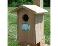 Screech Owl House SESC1035C