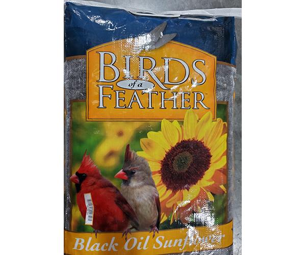 Black Oil Sunflower 20 lb. PWB