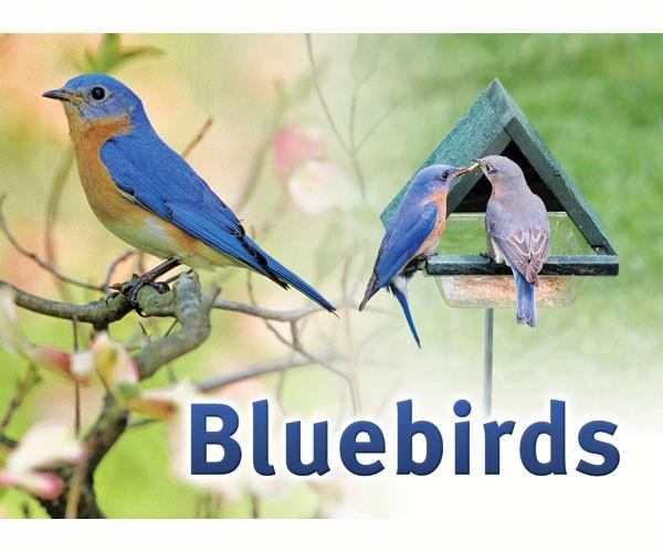 Bluebird Sign SESIGNBLUEBIRD'