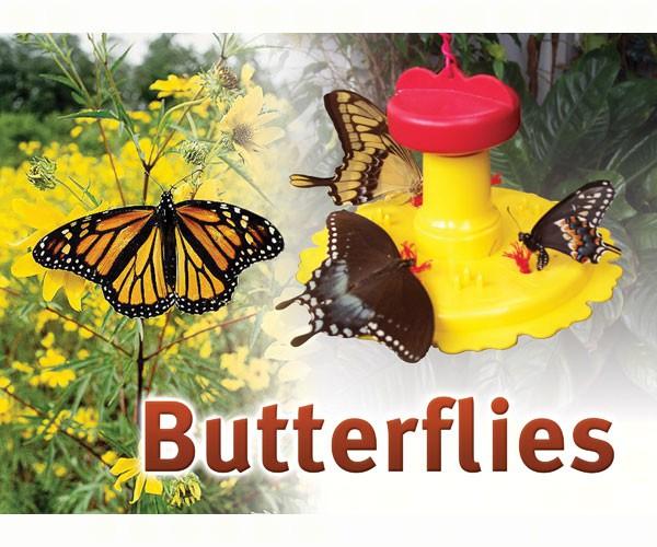 Butterflies Sign SESIGNBUTTERFLY'