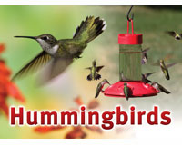 Hummingbird Sign SESIGNHUMMING