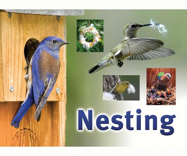 Nesting Sign SESIGNNEST'