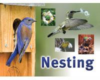 Nesting Sign-SESIGNNEST