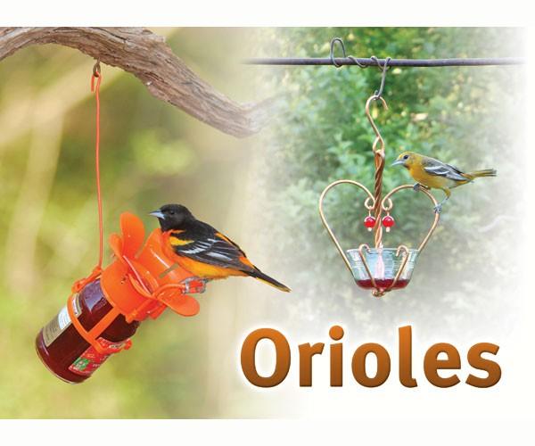 Orioles Sign SESIGNORIOLE'