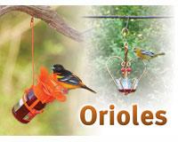 Orioles Sign SESIGNORIOLE