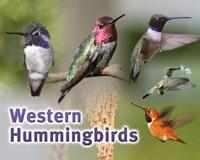 Western Hummingbird Sign SESIGNWESTHUM