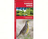 Kansas Birds by James Kavanagh-WFP1583550472