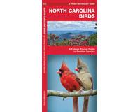 North Carolina Birds by James Kavanagh-WFP1583550670