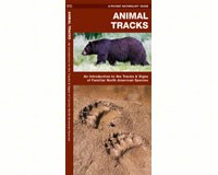 Animal Tracks by James Kavanagh-WFP1583550724