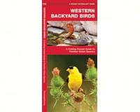 Western Backyard Birds by James Kavanagh-WFP1583550892