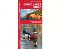 Great Lakes Birds  by James Kavanagh-WFP1583550922