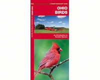 Ohio Birds by James Kavanagh-WFP1583551042