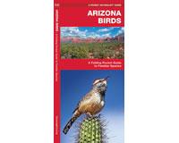 Arizona Birds by James Kavanagh-WFP1583551073