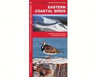 Eastern Coastal Birds by James Kavanagh-WFP1583551097