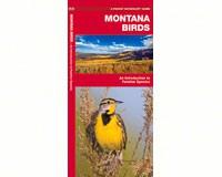 Montana Birds by James Kavanagh-WFP1583551110