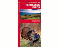 Tennessee Birds by James Kavanagh-WFP1583551172