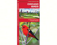 Chicago Birds by James Kavanagh-WFP1583551387