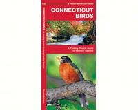 Connecticut Birds by James Kavanagh-WFP1583551394