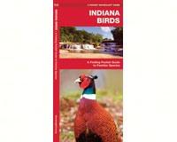 Indiana Birds by James Kavanagh-WFP1583551455