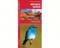 Nevada Birds by James Kavanagh-WFP1583551561