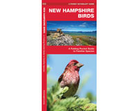 New Hampshire Birds by James Kavanagh-WFP1583551714