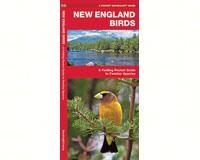 New England Birds by James Kavanagh-WFP1583551721