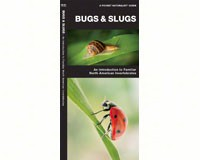 Bugs and Slugs by James Kavanagh-WFP1620052860