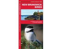 New Brunswick Birds by James Kavanagh-WFP1620053645