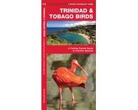 Trinidad & Tobago Birds by James Kavanagh-WFP1620053690