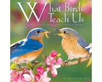 What Birds Teach Us-WC47331