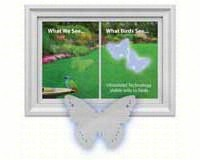 Butterfly Decal (4 per package)-WINDA3